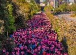 Exitosa Corrida Caminata Avon – Falp 2019 en la lucha contra el cáncer de mama